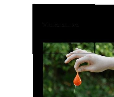 midorinonouen