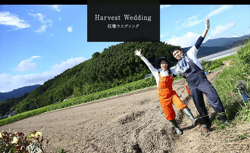 """今までにはなかったオリジナルの「収穫ウェディング」マリノアウエディングでオススメのスペシャルウェディングプラン。感謝の気持ちを伝えるウェディング。糸島の農園で新郎・新婦様が力を合わせて育てた野菜が、ウェディングのおもてなし料理に生まれ変わります。おふたりが大切な人たちを想い浮かべながら育てた野菜で作る婚礼料理。世界に一つだけのお料理で感謝の気持ちをお伝えてみませんか。ご両親やご親族、今までお世話になった方々に感謝今までお世話になった方々に感謝の気持ちを伝えるウェディングスタイル。その温かな気持ちを何とかカタチにしたいとの想いから生まれた""""収穫ウェディング""""。おふたりが力を合わせて育てた野菜が結婚式のおもてなし料理に生まれ変わります。世界にひとつだけのお料理で感謝の気持ちを伝えてみませんか。"""